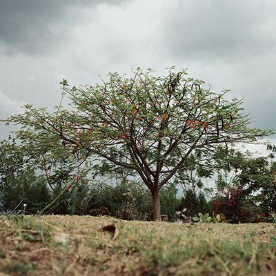 Kleiner_Baum